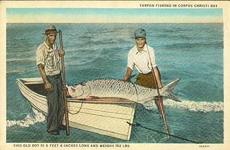 Old Texas Tarpon Fishing Postcard Tarpon Pinterest