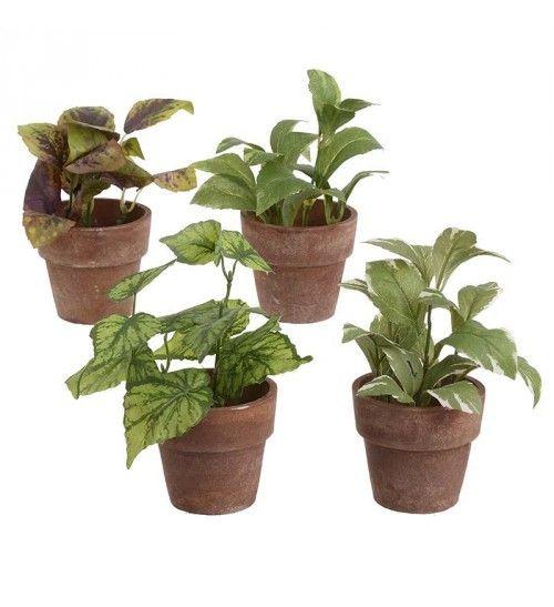 S_12 PLANT IN PAPER POT 4 DESIGNS H-16 CM