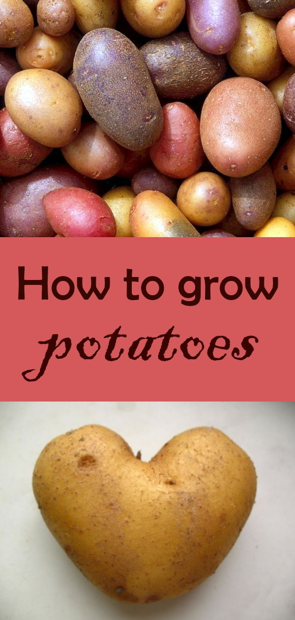 Potatoes The Complete Guide To Growing Potatoes Potatoes