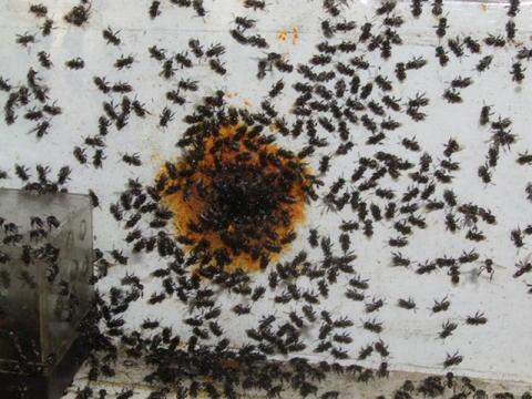 moonbares hive