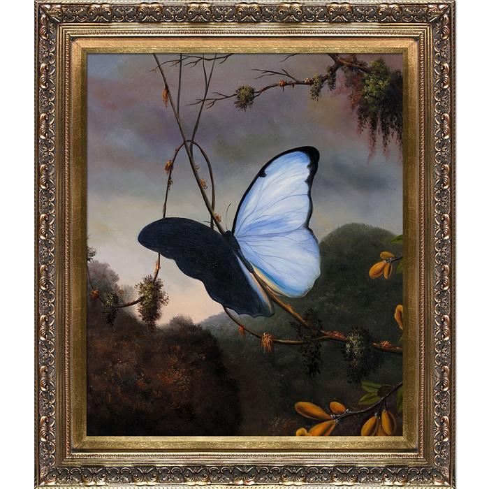 Blue Morpho Butterfly By Martin Johnson Heade Framed Print
