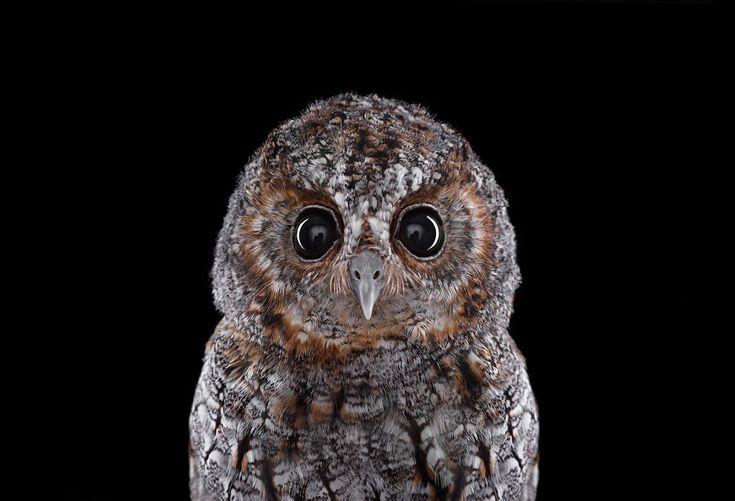 Keepers Of Wisdom: I Explore The Mystical Beauty Of Owls | Bored Panda