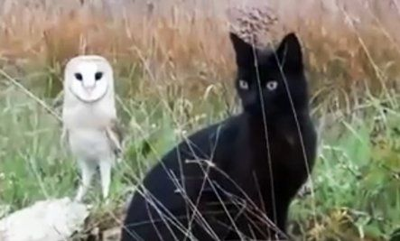 Owl and Cat Are Best Friends (Video) THIS IS SO COOL!    http://www.care2.com/greenliving/owl-and-cat-are-best-friends-video.html