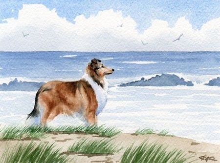 ROUGH COLLIE Beach Dog Watercolor Art Print Signed by k9artgallery, $12.50