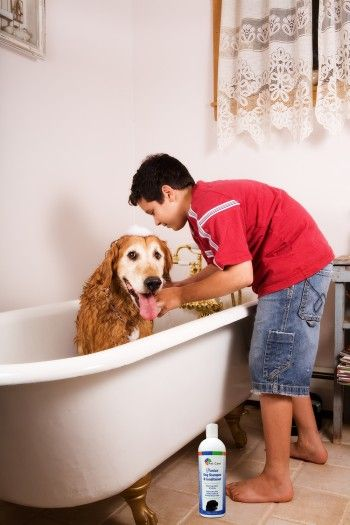BVH Pet Care Releases Dog Shampoo Suitable for Skin-Allergic Dogs