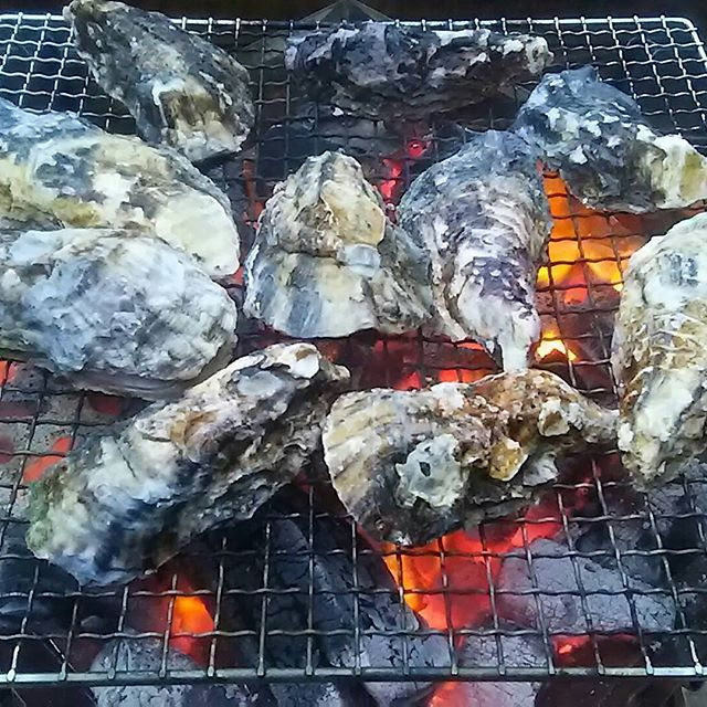この牡蠣を食べたいが為に実行されたキャンプ⛺ めちゃくちゃ牡蠣を堪能!  やっと、今期待ちに待った牡蠣を心行くまで食べれたよ~😆 #キャンプ#ファミリーキャンプ#camp#牡蠣 のための#牡蠣づくし の#オイスターパーティー #酢牡蠣#焼き牡蠣#牡蠣鍋#朝食#牡蠣うどん#思いきって#牡蠣のみ#肉 は一切無し#大成功#大正解#大満足 の#牡蠣キャンプ#幸せ#牡蠣最高#牡蠣食べ放題#牡蠣大好き#yummy#もっと食べたい#食べて飲んで#癒された#日本酒#月桂冠 も御供に#冷や で#ごちそうさまでした  ブログに嬉しがってUPしたよ😁 よかったら見てね❗  ブログ→http://kaminote-baby.jugem.jp/