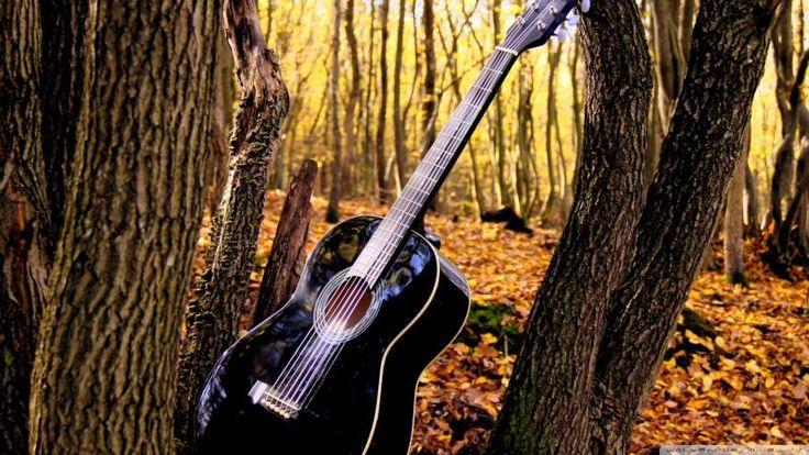Guitar in Forrest