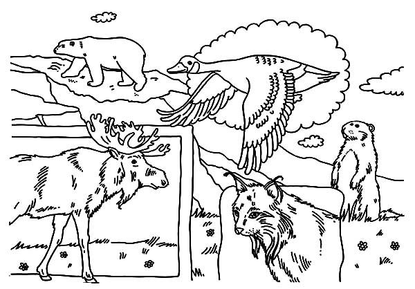 Canada Day National Animals On Canada Day Coloring Pages