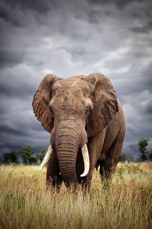 Absolutely Stunning Elephant