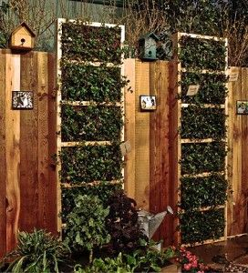 13 Best Strawberry Wall Garden Images On Pinterest