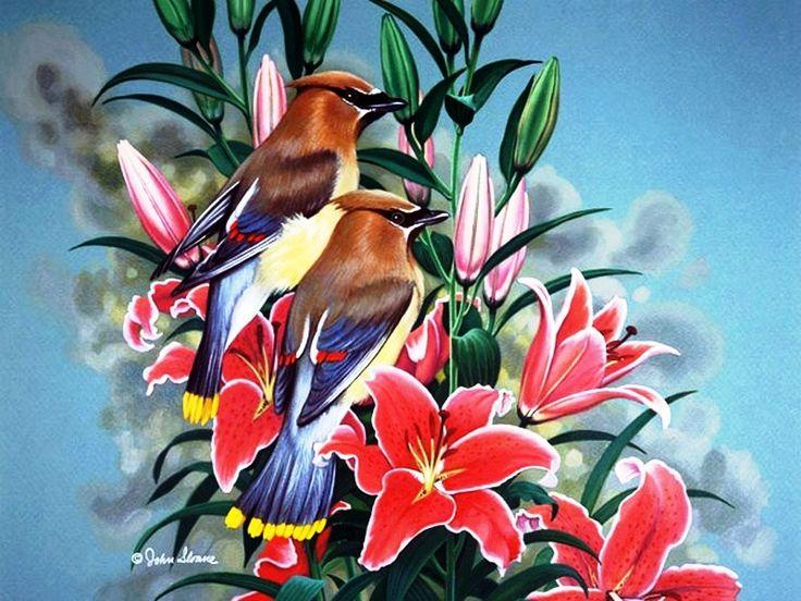Райская птичка открытка, для открытки