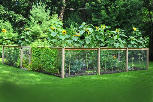 25 best images about garden on pinterest garden ideas for Attractive vegetable garden fence