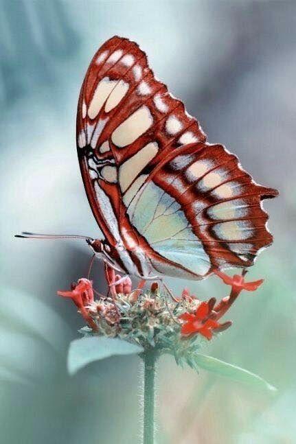 Épinglé sur Moth & Myth