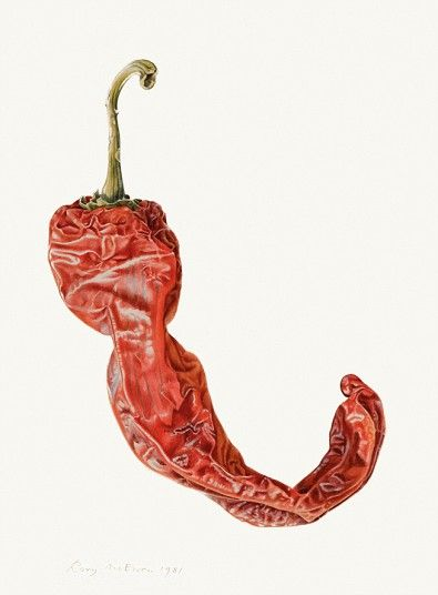 A shrivelled red pepper. McEwen helped to  kickstart a revival of interest in botanical painting. The pictures in the exhibition span from the 1950s all the way to the 1980s.