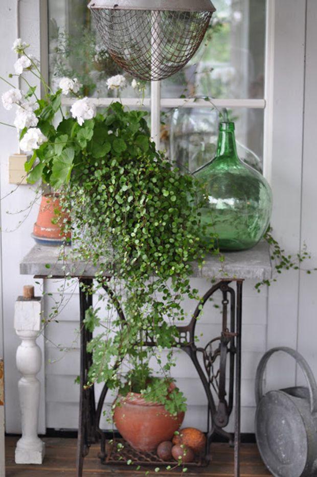 Decoração vintage moderna - máquina de costura antiga usada como mesa apoio plantas