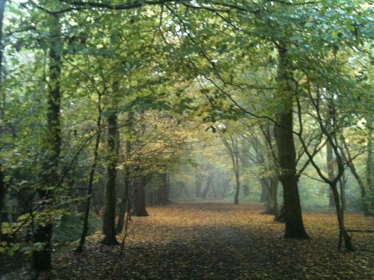 Belhus Woods, Hornchurch, Essex, England