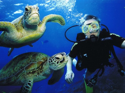 Diving in the Great Barrier Reef with the sea turtles!!!  I SOOOOOOOO wanna do this!!!