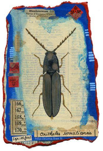Insecte, Peinture / collage, e2ma, Emmanuelle Folligné