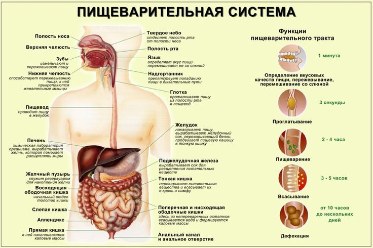 Чтобы похудеть достаточно просто не есть, пока в желудке находится пища. Так, один класс продуктов следует употреблять лишь после того, как состоится переваривание (усвоение) другого. Для этого следует знать время переваривания продуктов. Питание по такому принципу поможет не только распрощаться с лишним весом, но и сохранить здоровый желудочно-кишечный тракт. Желудок будет постепенно уменьшаться в …