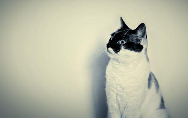 Was verrät dein Wallpaper über dich? Neuer Lieblingshintergrund für deinen Bürobildschirm gesucht? Unser Wallpaper-Guide mit schrägen Vögeln und schönen Füchsen zum Download. #hallobüro #art #photography #katze #catlovers #catcontent #cat #hintergrund #desktop #keeplearning
