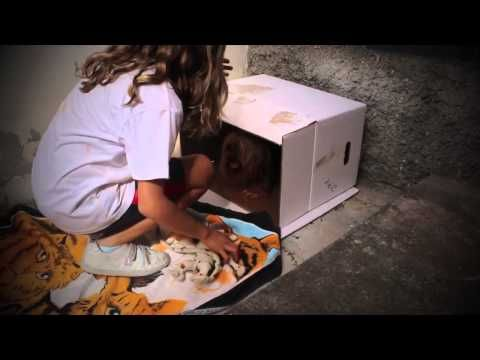 Parodia de Jefe en Pañales | Brothers life - YouTube