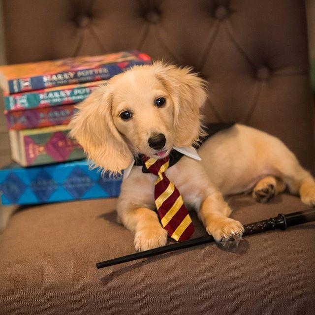 Harry Poochie!