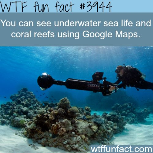 You can see underwater sea life on google maps -WTF weird but interesting fun facts!