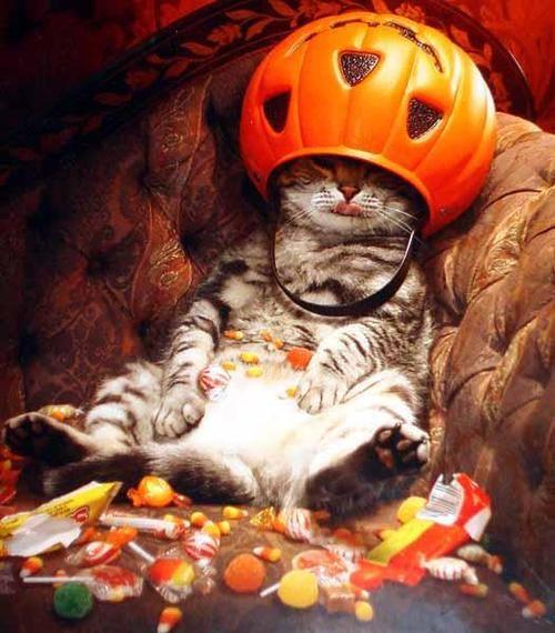 Kitty gots a sugar high!!