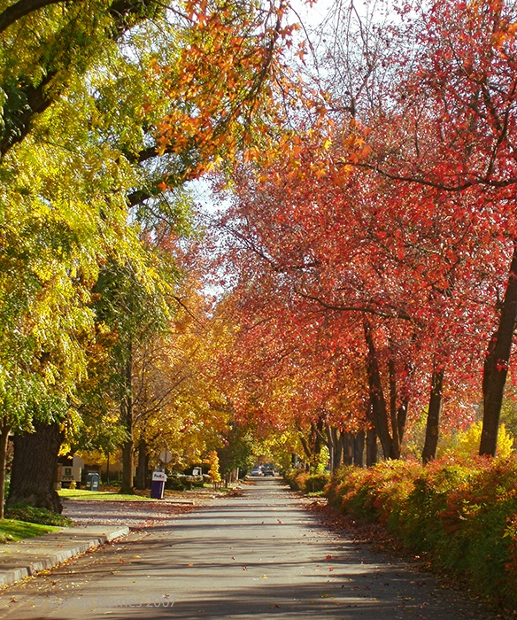 Chico, Ca. I always look for a way to drive down the Esplanade in the fall...I can't wait!