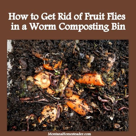 How to Get Rid of Fruit Flies in a Worm Composting (Vermicomposting) Bin. We did these three simple things and no longer have fruit flies so we can keep our worm bin in the house! Montana Homesteader