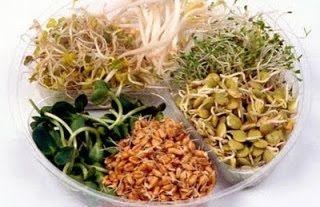 Germenii și vlăstarii - secretul semințelor germinate     Consumul de germeni (semințele încolțite ale plantelor comestibile) și-a demonstrat de nenumărate ori efectul benefic asupra sănătății. Să redescoperim și să cunoaștem aceste daruri minunate al naturii deoarece conțin o forță străveche unică în lumea plantelor. Forța revitalizantă a germenilor este cunoscută de umanitate de mult civilizațiile antice apreciindu-i în mod deosebit. Acum 5000 de ani în China au fost făcute primele…