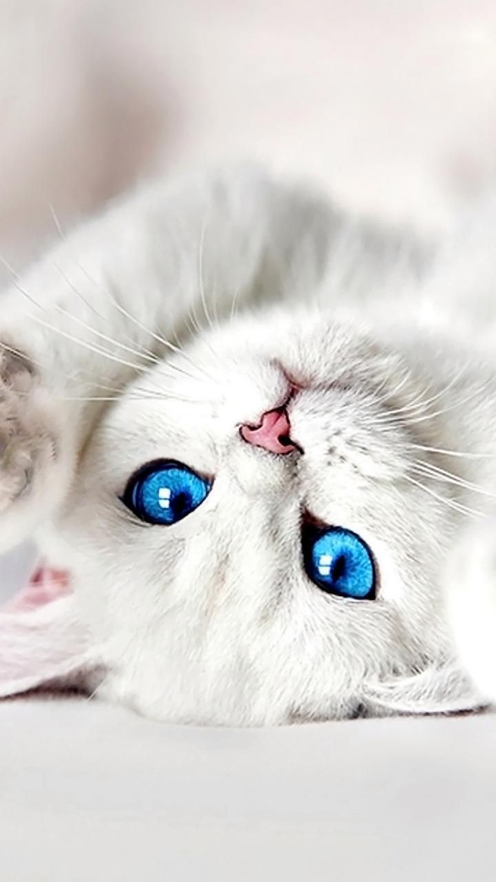 Really Cute Cats And Kittens White Cute Kitten Wallpaper Powerballforlife Kittens Cutest Cute Baby Cats Baby Cats