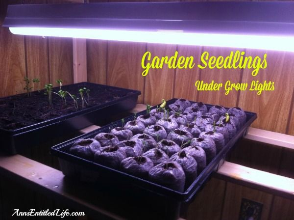 Growing Garden Seedlings Indoors - Start your gardening seeds indoors, in soil, peat bags and plastic bags!  Materials, how to, pictures. http://www.annsentitledlife.com/produce/growing-garden-seedlings-indoors/