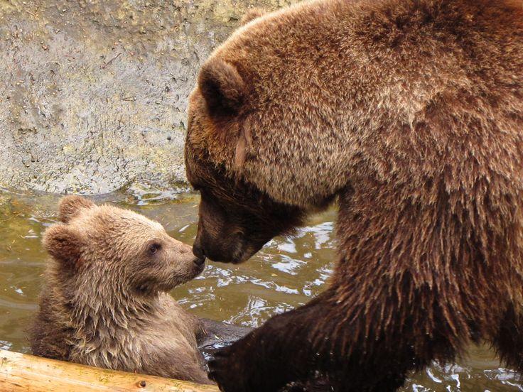 Grote beer en kleine beer
