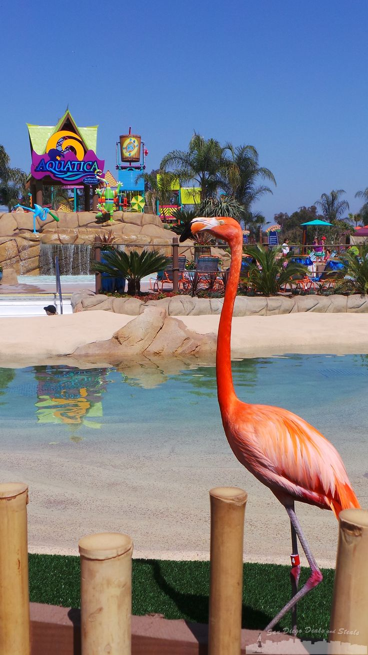 Aquatica San Diego SeaWorld is open in Chula Vista! Check out this awesome San Diego Waterpark!