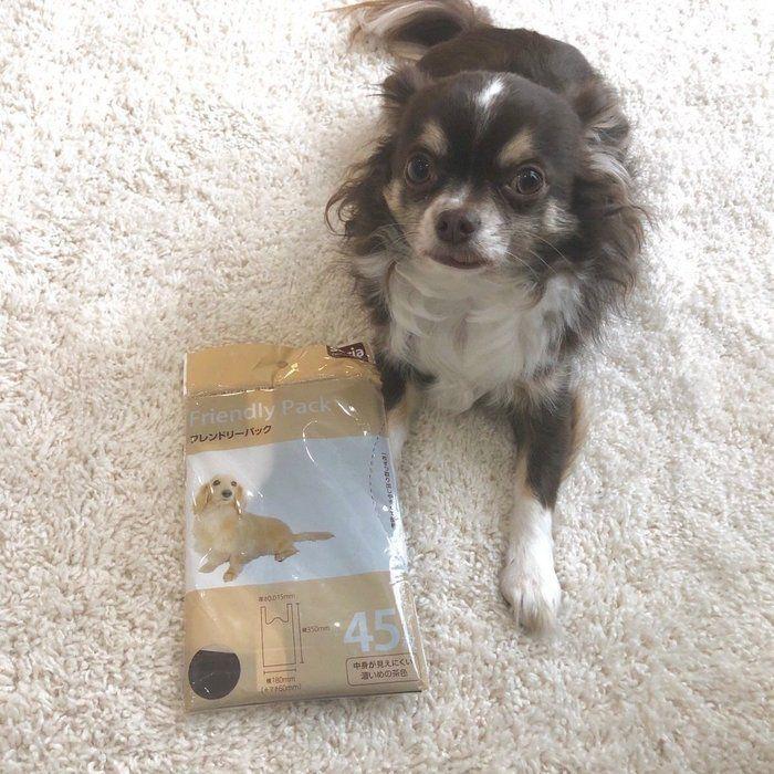 愛犬とのお散歩に セリア フレンドリーパック 体験レポ いぬのきもちweb Magazine フレンドリー 犬 ペット用品