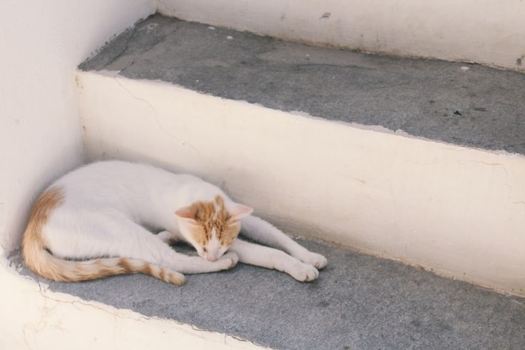 Cats Love Athens: These hidden places