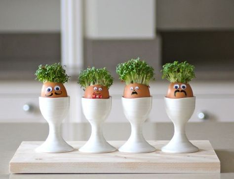 Cressmen // watercress sprouts in eggshells