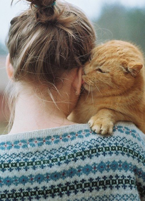 relationship between cats and humans
