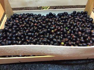 Camper Chef Road: Olive marinate ingredienti e dosi e procedimento