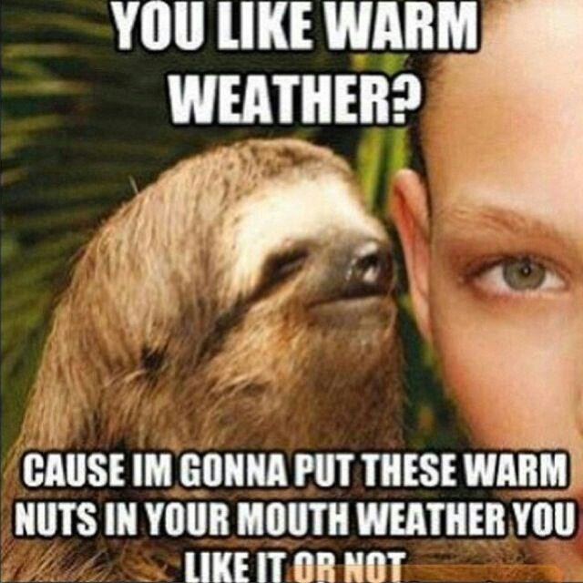 funny sloth pictures whispering