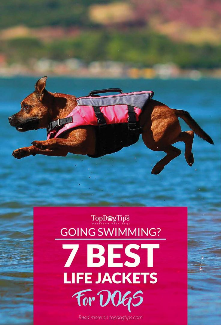Top Best Dog Life Jackets