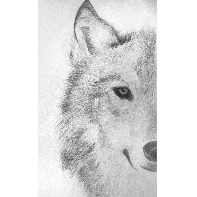 Wolf sketch by @lenitapepa