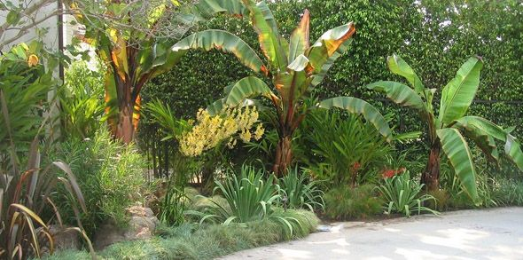 17 best images about dry tropical garden on pinterest for Sonoma garden designs