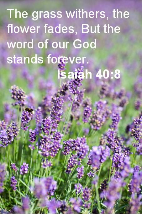 : The Lord, God Words, Scriptures Isaiah, Isaiah 40 8, Scriptures Quotes Wisdom, Bible Verses, Bible Ver From Isaiah, Favorite Bible Ver, Bible Ver With Flowers