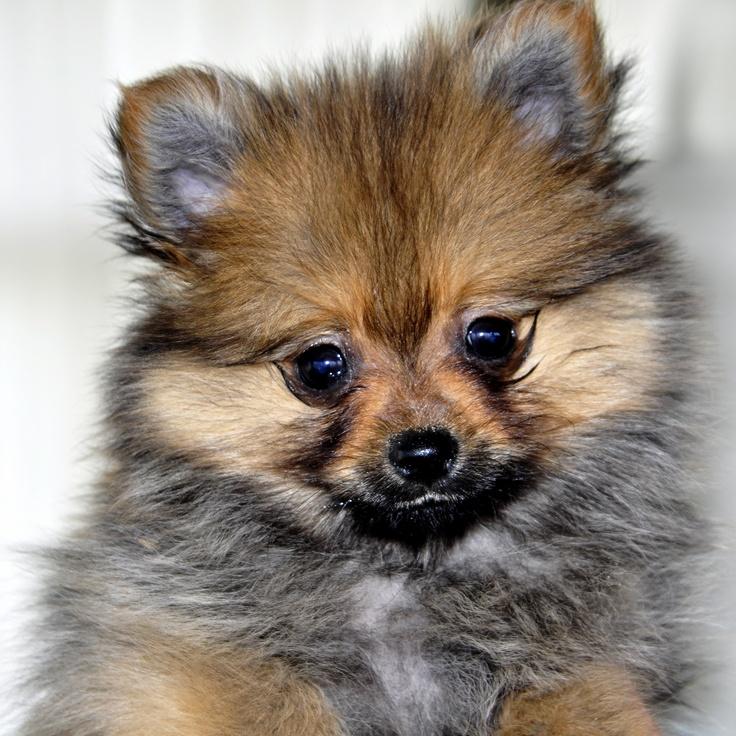 Laat op 1 dec a.s  jouw hond fotograferen door Monique de Vries bij Dogs Secret Fashion Haltestraat 61#Zandvoort