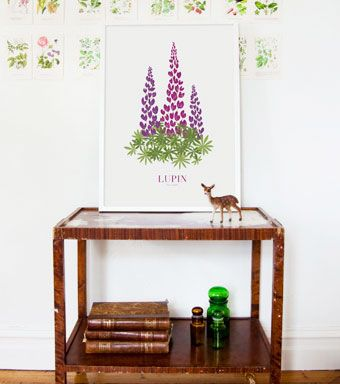 Lupin Art print in limited edition of 150 prints from Formstigen2a.se. Purple lupins with latin name. Poster inspired by fields of lupins in early Swedish summer.