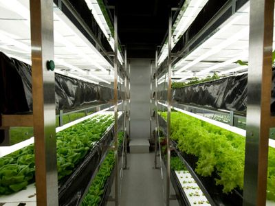 89 best images about grow tents indoor hydroponics systems on pinterest indoor crop - Hydroponic container gardening ...