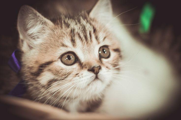 фотографирую котят