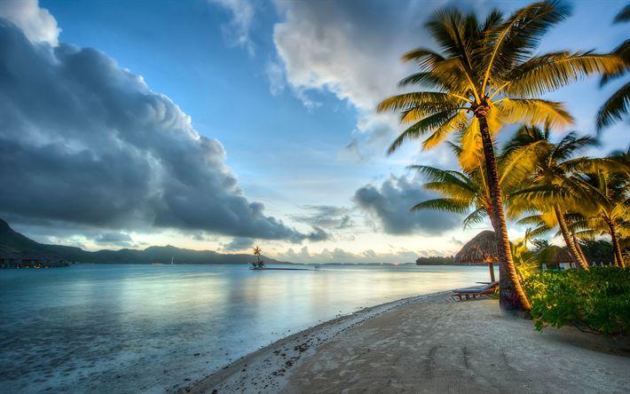 Download wallpapers tropics, ocean, beach, evening, palms
